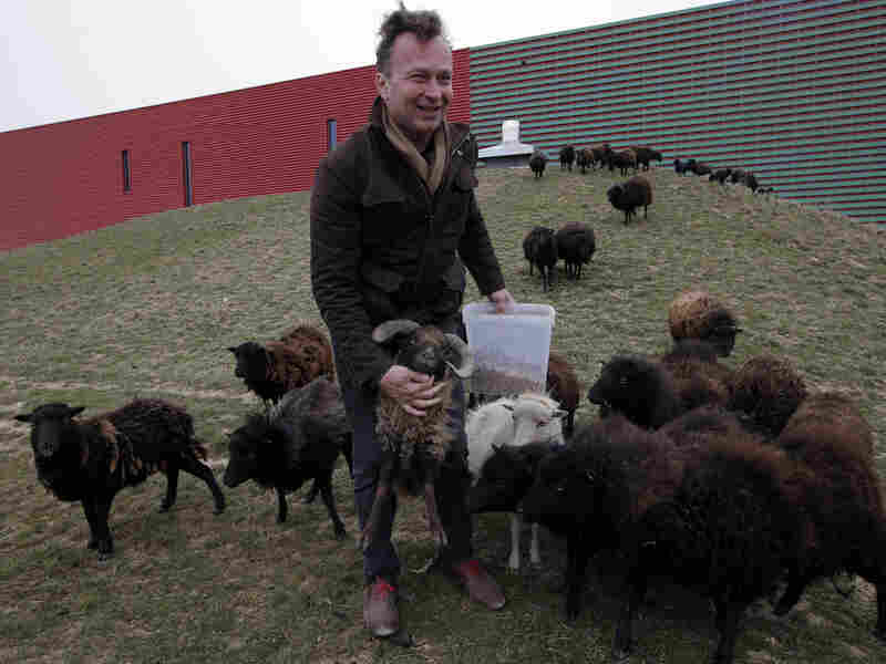 """Sylvain Girard, owner of EcoMouton, shows his flock """"mowing"""" around a truck warehouse."""