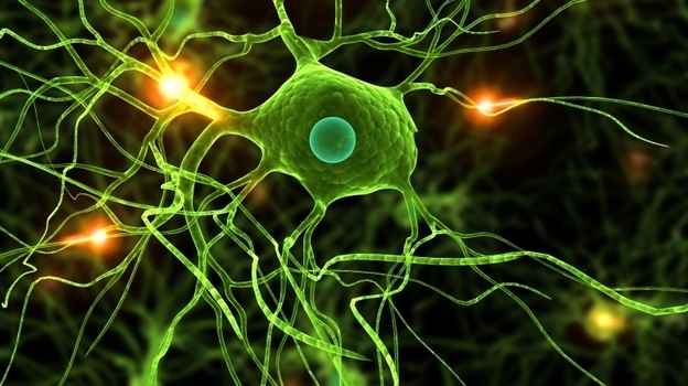Genetic changes in signaling pathways in the brain may cause schizophrenia. (iStockphoto.com)