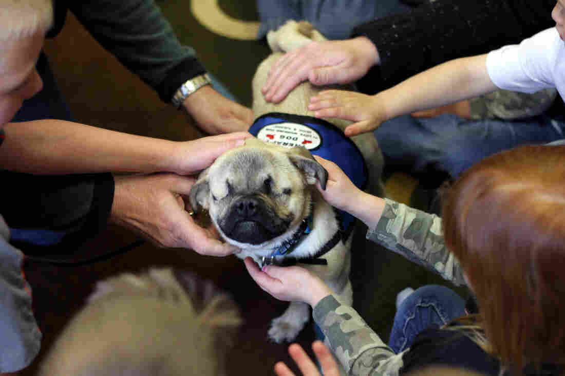Xander, a pug mix, lost both his eyes in an accident. He now works as a therapy dog, and visits groups such as this class at a daycare center.