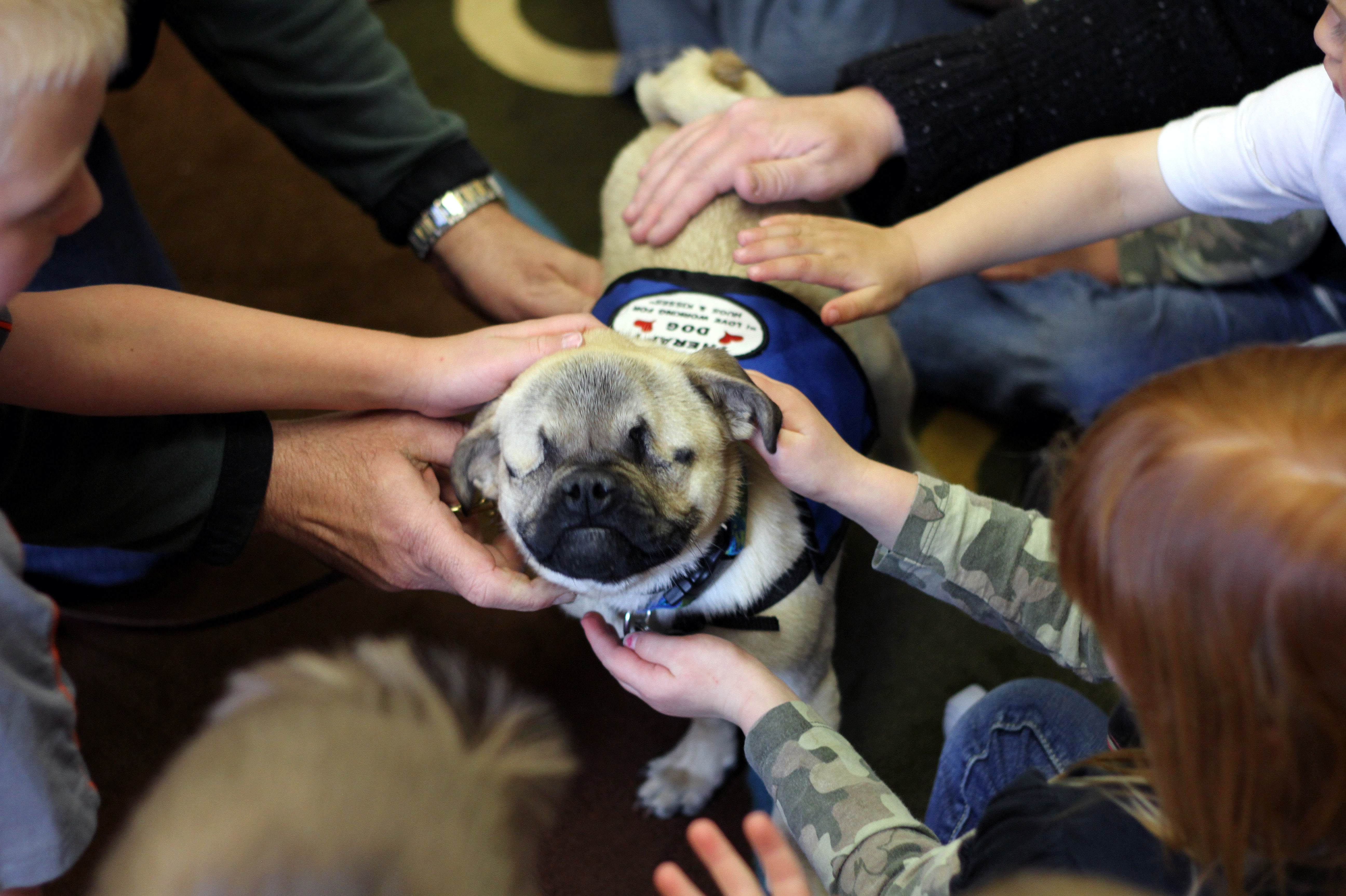 Little Dog Does A Big Job In Oregon
