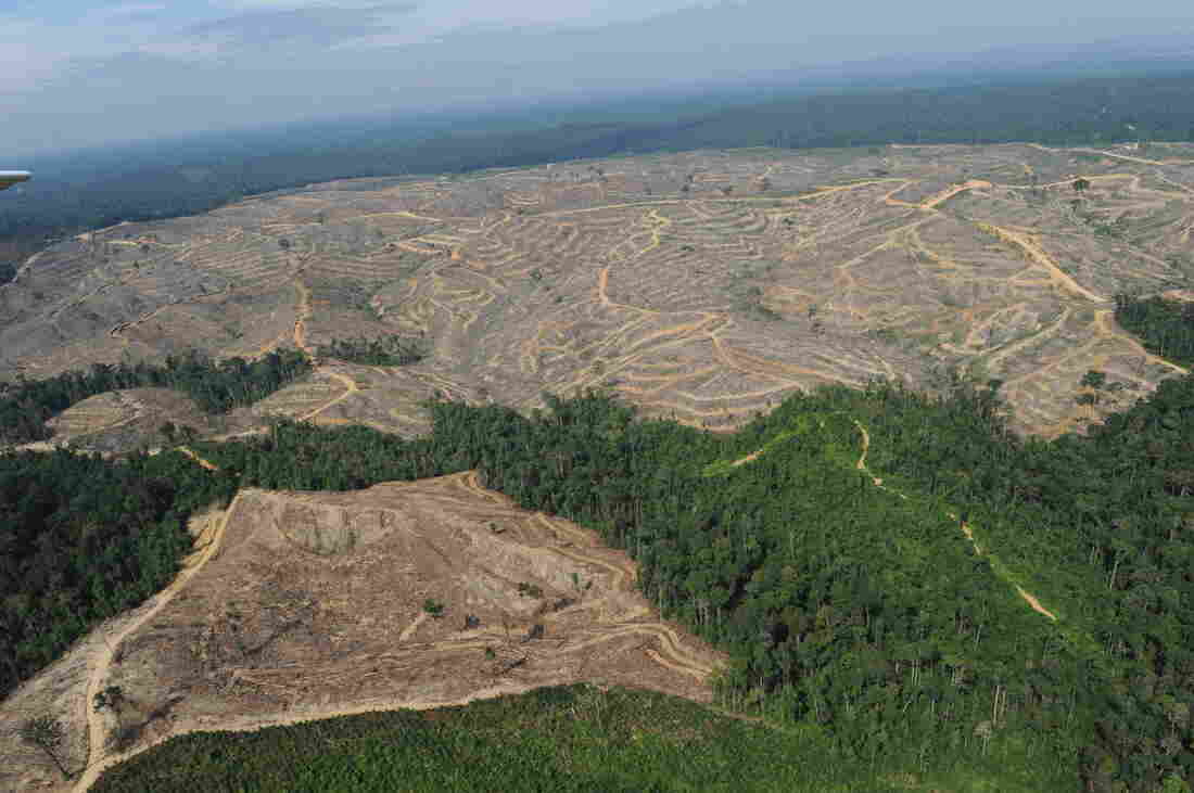 This photo shows a heavily logged concession affiliated with Asia Pulp and Paper, or APP, one of the world's largest papermakers, on the Indonesian island of Sumatra, in 2010.