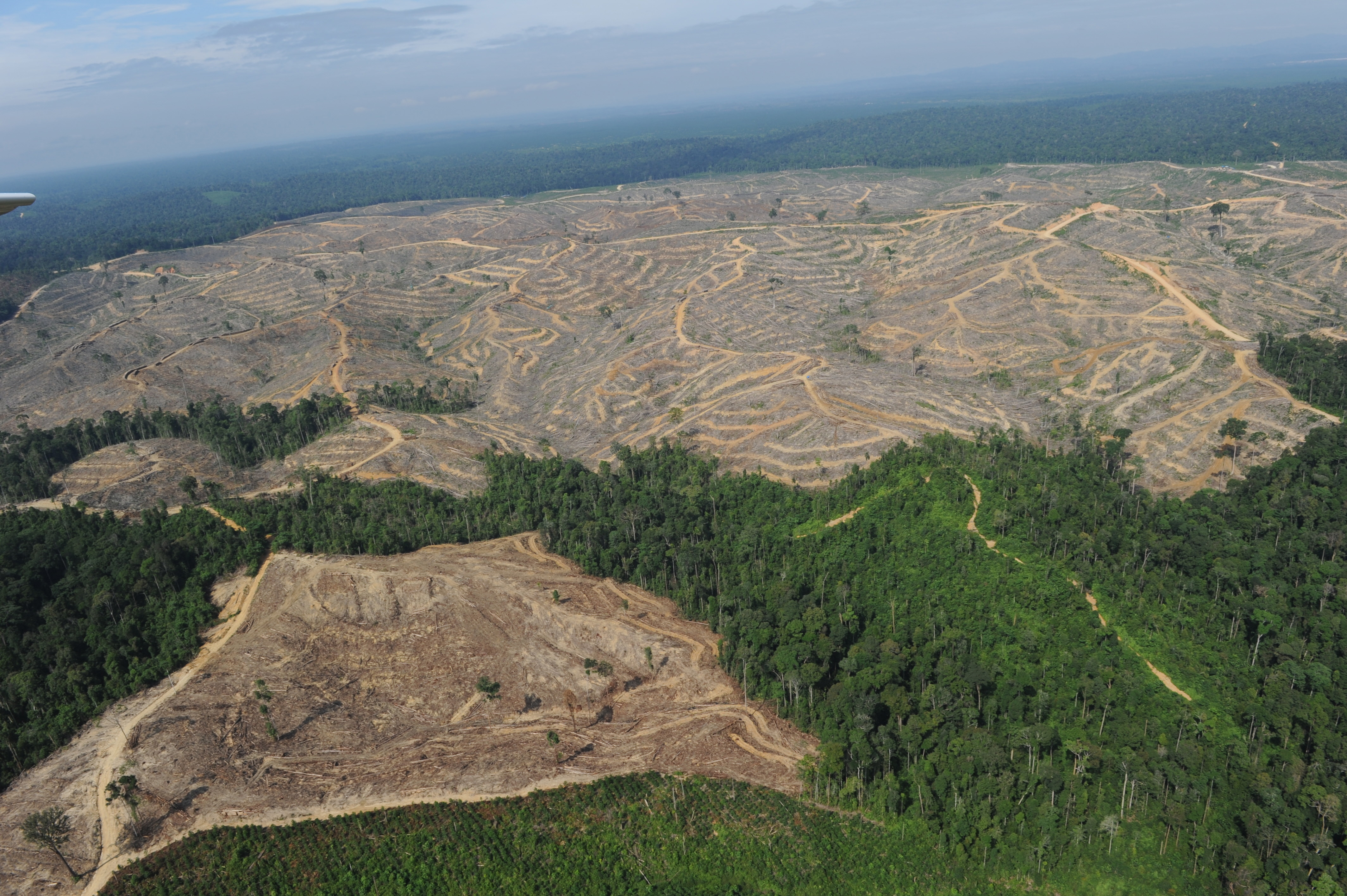 Battling Deforestation In Indonesia, One Firm At A Time