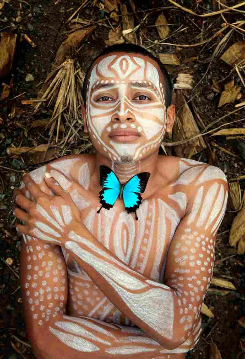 Papilio ulysses