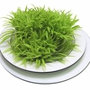 Some 3.5 million years ago, our ancestors put grass on the menu.