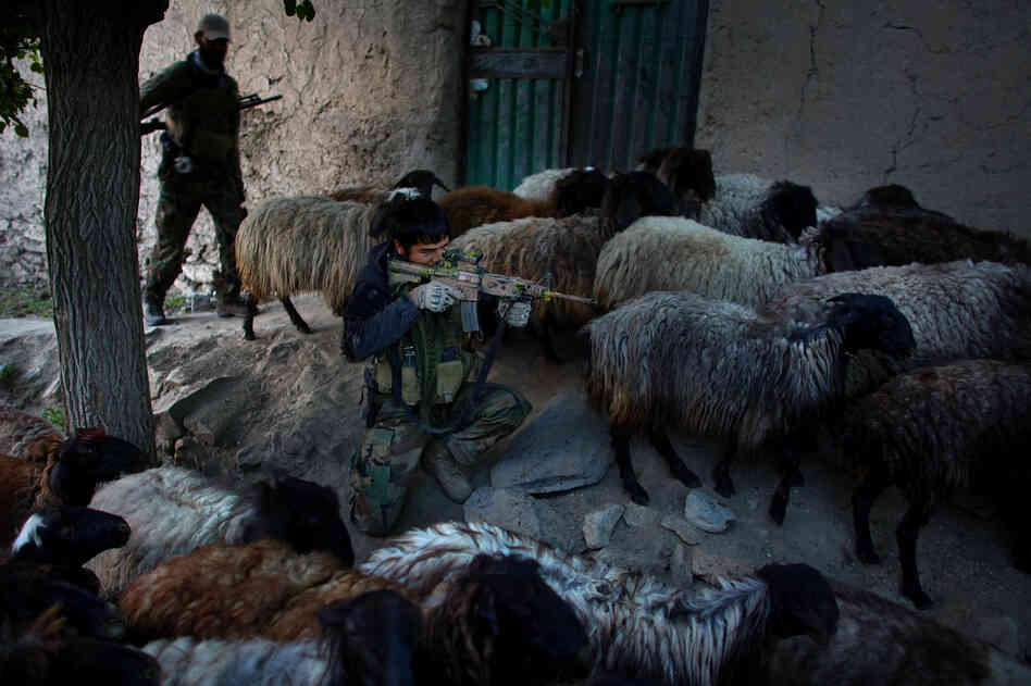 Afghan National Army Special Forces keep a watchful eye on a potential ambush area while a herd of sheep and goats passes by during a patrol into Kasan. The U.S. Army Green Berets along with the ANASF have been training Afghan local police to take the lead in their village stability and security.