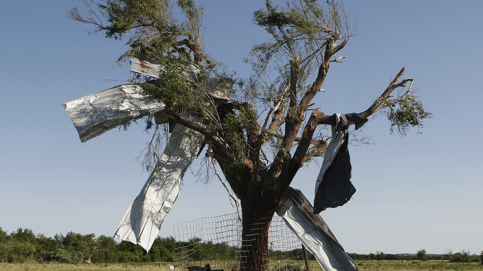 After the storm: Sheet metal that was torn off a building during Friday's tornado in El Reno, Okla., ended up caught in a tree. (Reuters /Landov)