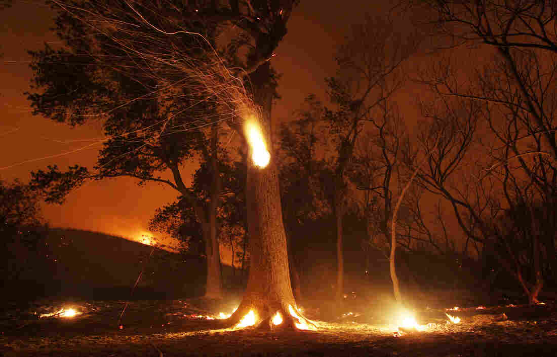 Sparks fly from a burning hollowed tree in the area of the Powerhouse fire near Lake Hughes, Calif., Sunday.