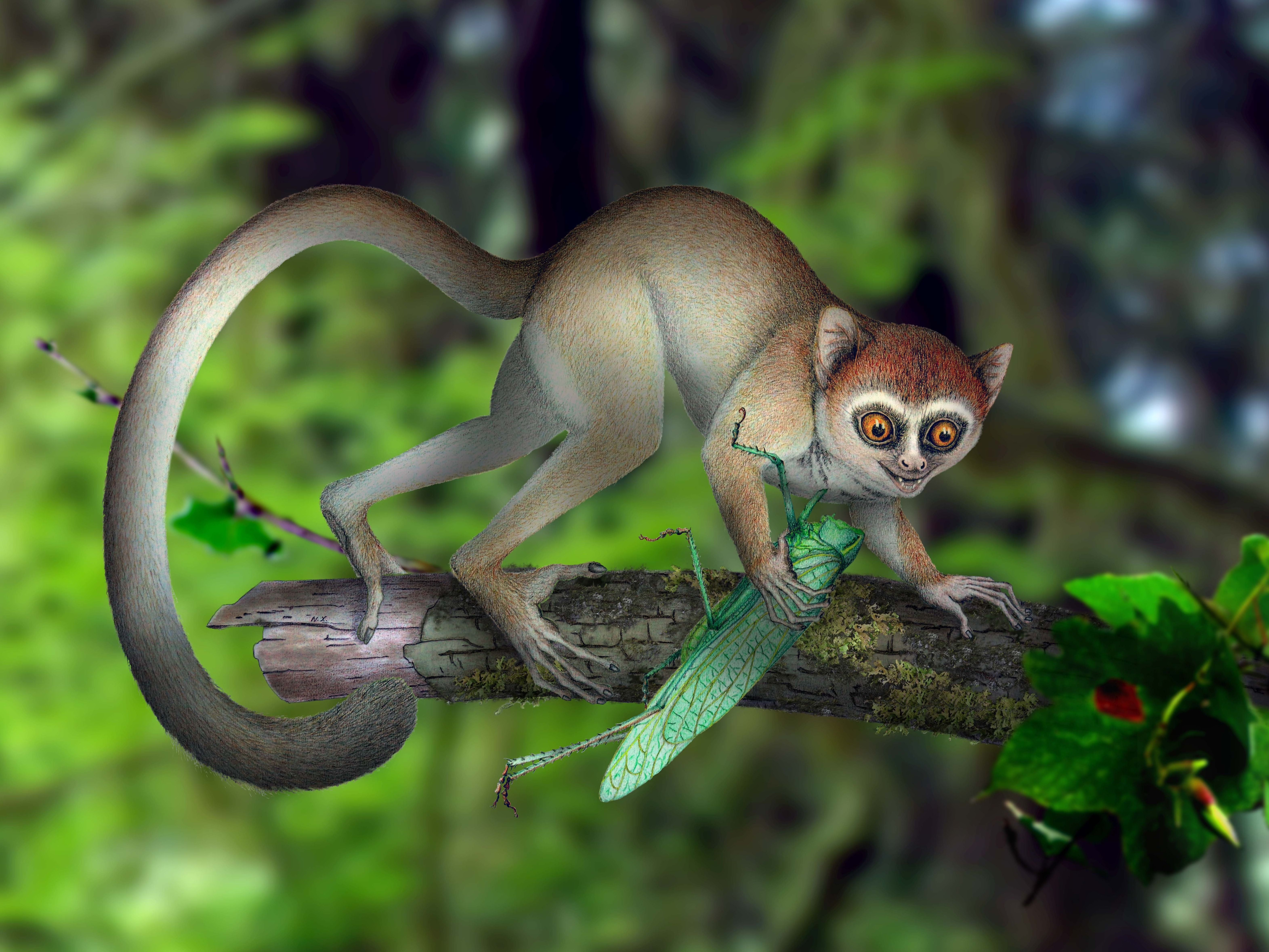 Tiny, Ancient Tree-Dweller Was One Of Earth's Earliest Primates