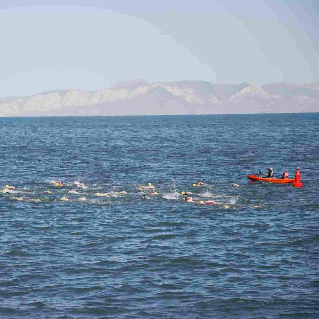 Salt, Flies, Pickled Tongues: A Perfect Great Salt Lake Swim