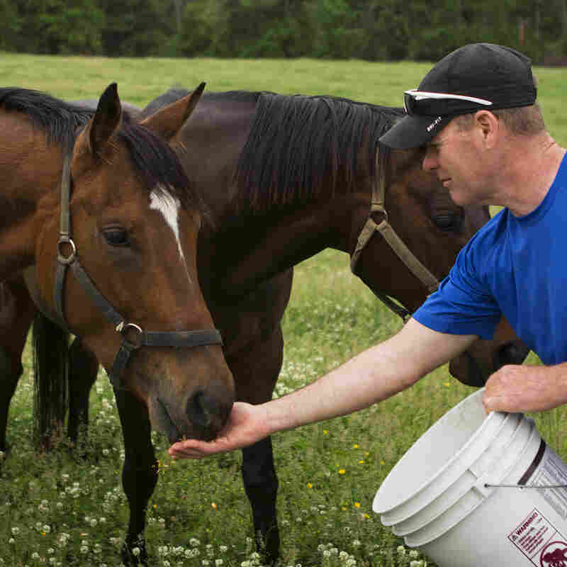 Tom Strauss tries to round up some of the rescued horses to show potential adopters, at the MidAtlantic Horse Rescue Organization near Chesapeake City, Md. The rescue takes care of up to 14 horses at a time.