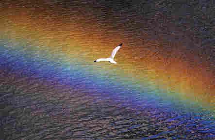 "John H. White's philosophy: ""Keep In Flight"""
