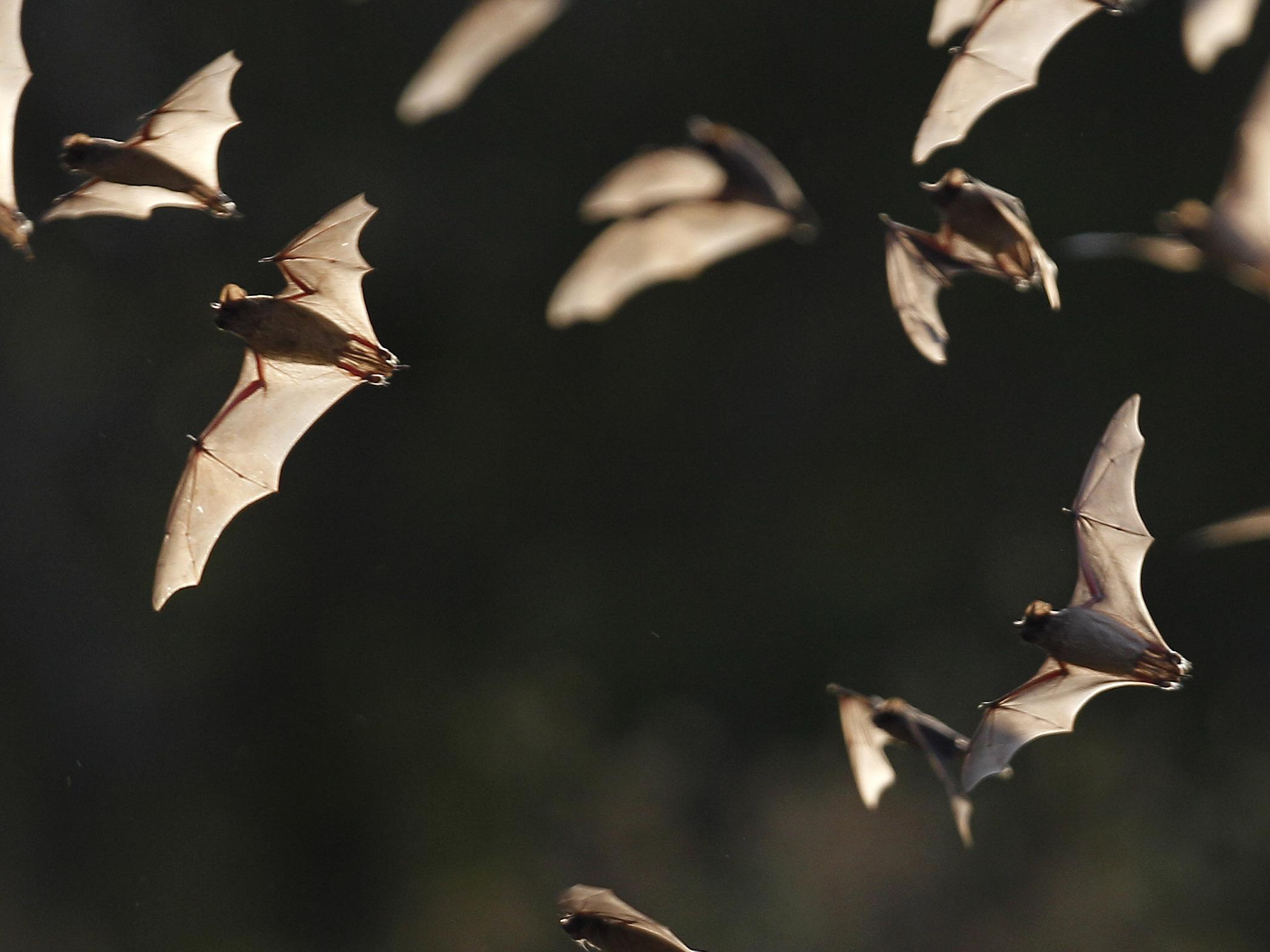 Massive Bat Cave Stirs Texas Size Debate Over Development