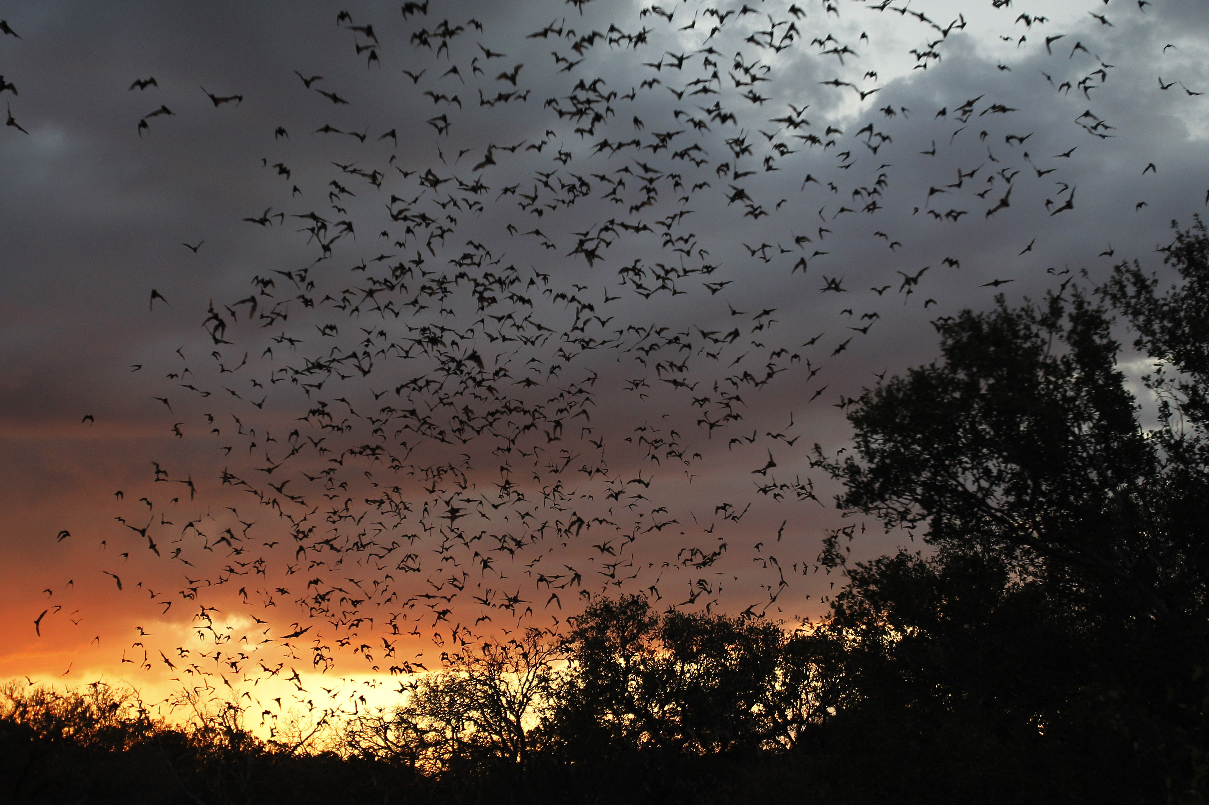 Massive Bat Cave Stirs Texas-Size Debate Over Development