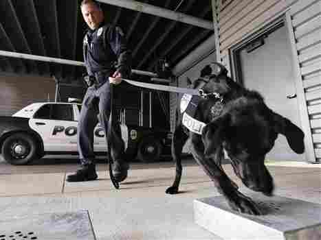 How fast are our stances toward marijuana changing? Washington, which legalized marijuana last fall, has had to acquire new drug-sniffing dogs who aren't trained to go after pot.