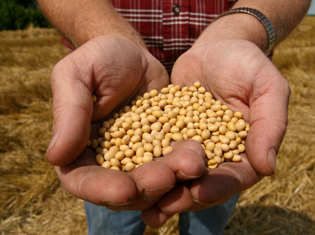 A farmer holds  Monsanto's Roundup Ready soybean seeds at his family farm in Bunceton, M