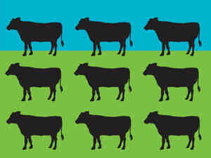 """Journalist Judith D. Schwartz calls her book Cows Save The Planet """"a call to action on behalf"""