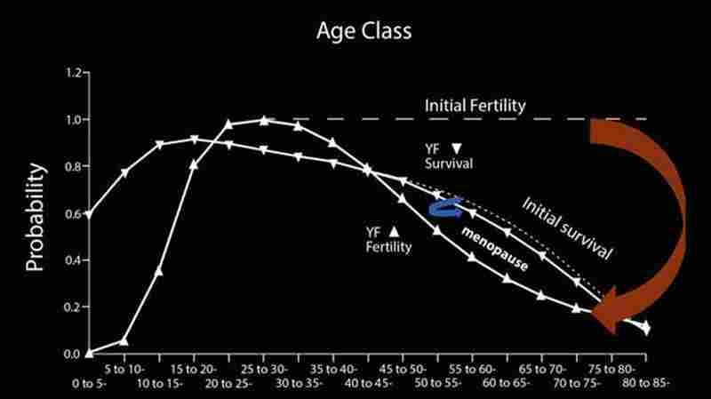 A woman's probability of surviving beyond 40 years is much greater than the probability that she is fertile.