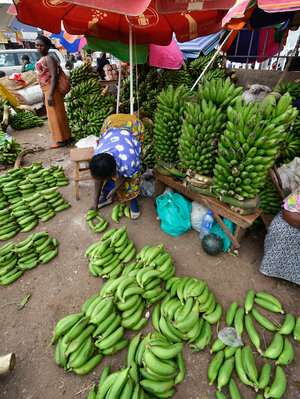 "Ugandan's love bananas so much that the word for food is the same as that for the popular banana dish ""matooke."""