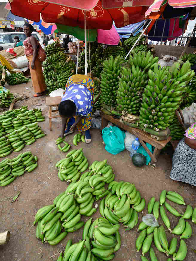 """Ugandan's love bananas so much that the word for food is the same as that for the popular banana dish """"matooke."""""""
