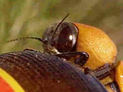 Beetle on a bottle