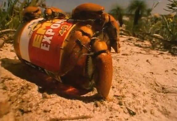 Male beetles on bottle