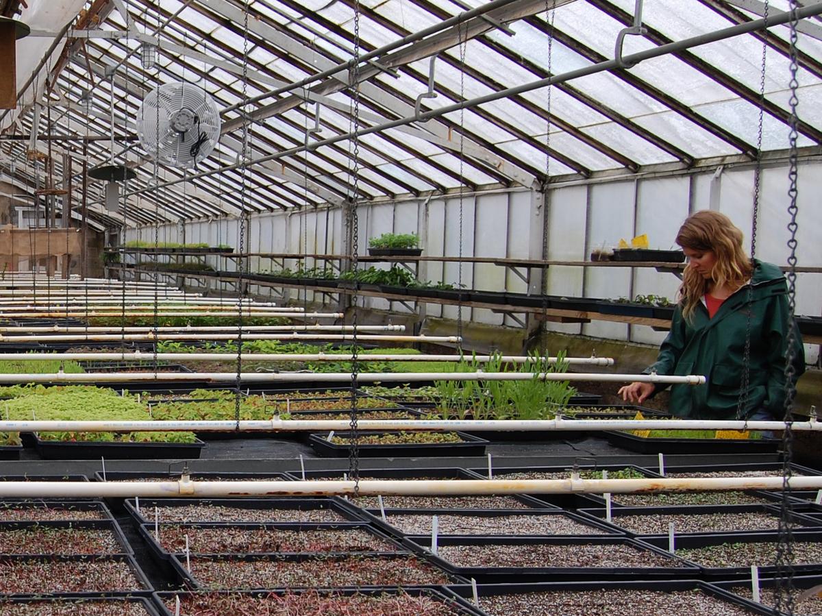 Staten Island Plant Nursery