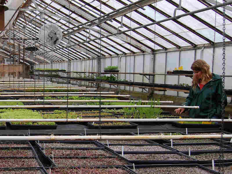 """Seeds are coaxed out of dormancy in the nursery at the Greenbelt Native Plant Center on Staten Island. The center considers its seed bank the """"Library of Congress"""" for the region's native plants."""