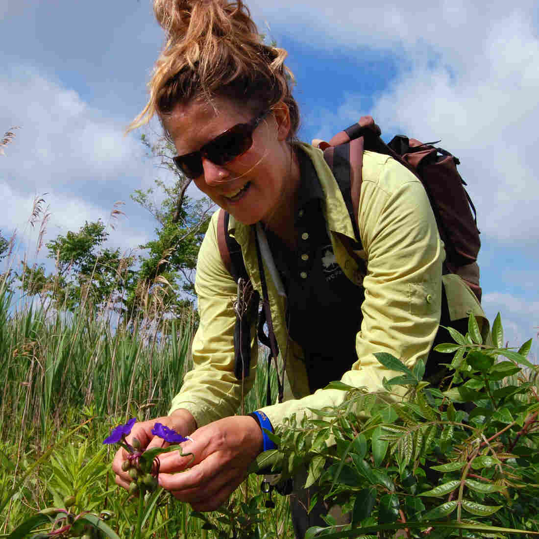 Heather Liljengren, a field taxonomist with the New York City Department of Parks and Recreation, examines the seed pods of the Virginia spiderwort at Oakwood Beach, Staten Island. Liljengren collects seeds from across the region for a seed bank of native plants.