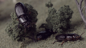 Cockroaches and beetles slither through a miniature world in a new video from Majical Cloudz.
