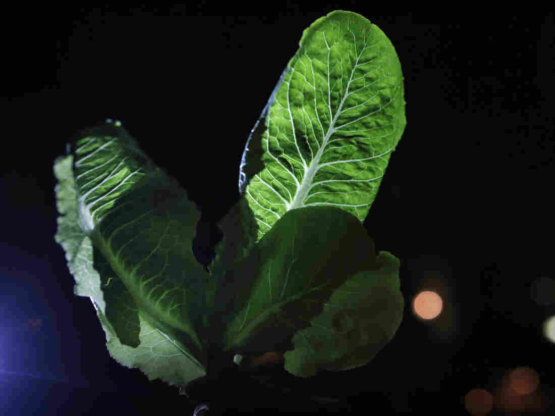 Researchers at Rice University conducted lab studies using light-dark cycles to try to coax more beneficial compounds out of fruits and vegetables.