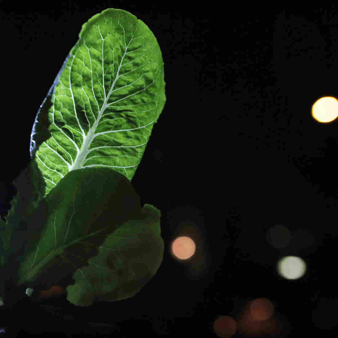 How Circadian Rhythms Give Vegetables A Healthy Boost