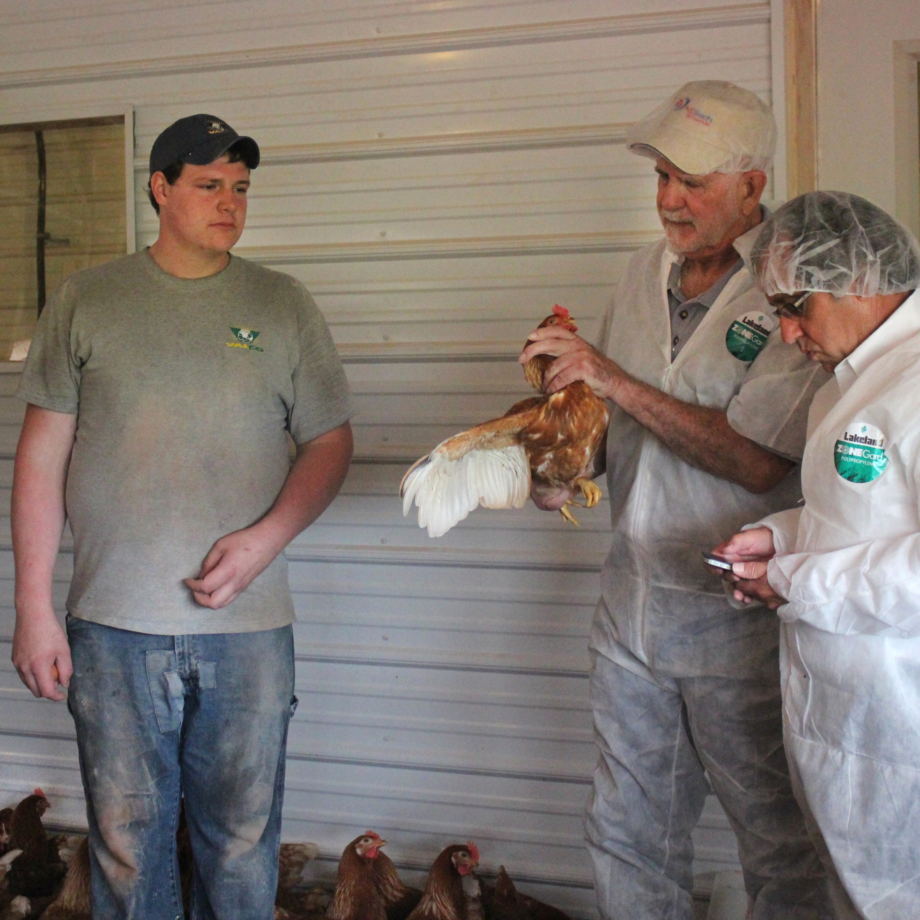 Harold Sensenig (left) is selling his cage-free eggs to Paul Sauder (right).  Denny Williamson (center, with chicken) works with Powell's Feed Service, which supplies chickens to Sensenig's farm.