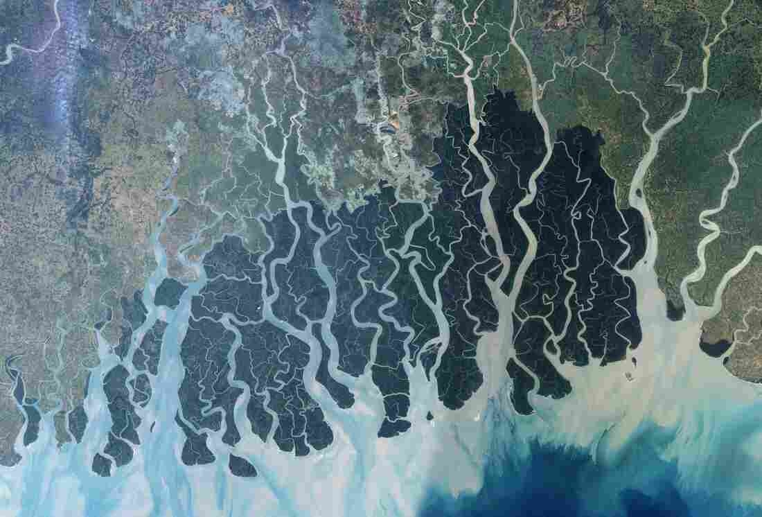 The Sundarbans, a mangrove forest at the edge of the Bay of Bengal, stretch across parts of southwestern Bangladesh and southeastern India.