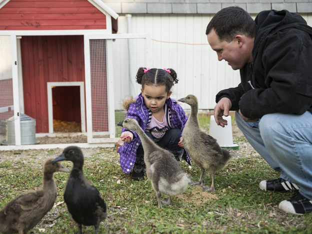 Baby Veronica and her biological father, Dusten Brown, feed geese and ducks in April in Nowata, Okla.