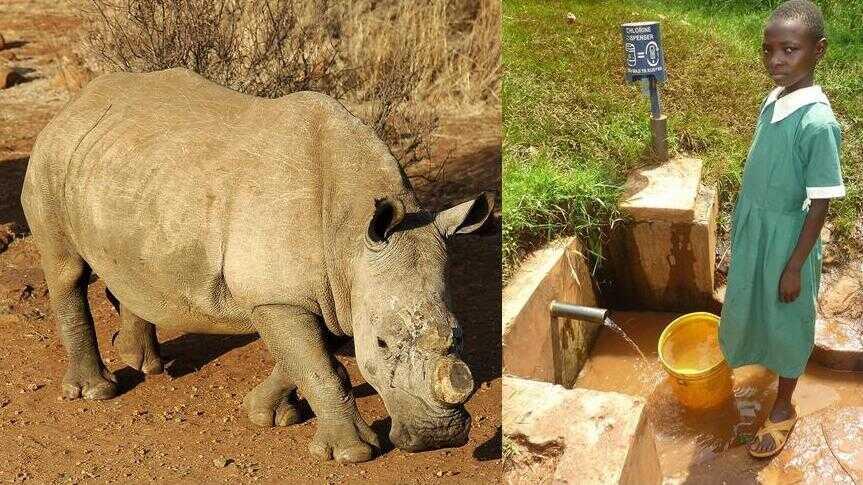 Rhinoceros, water