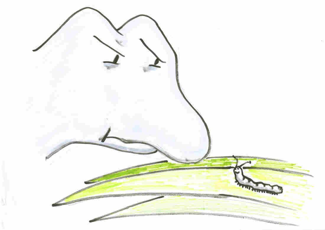 Dinosaur and caterpillar