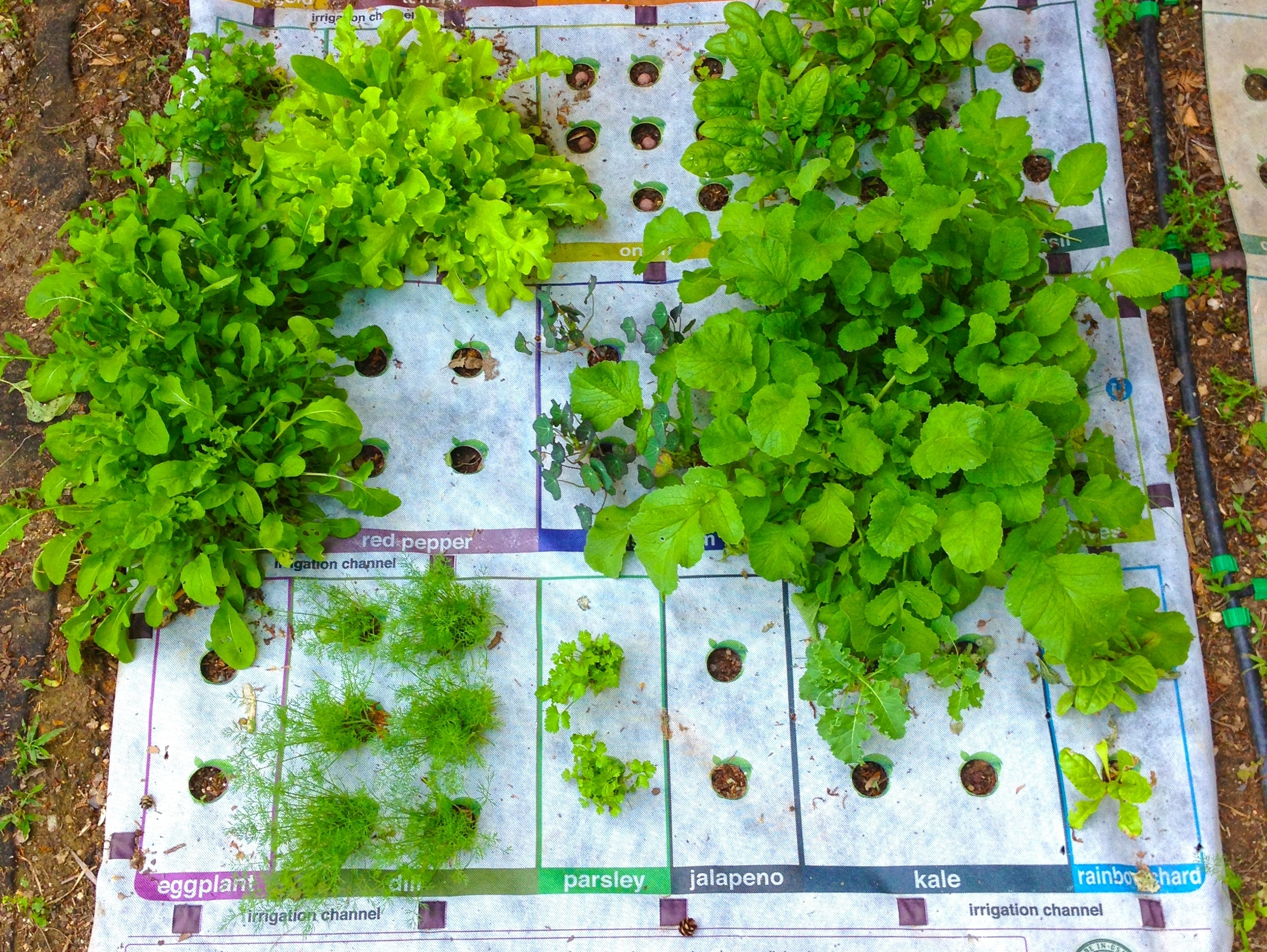 Why Micro-Gardening Could Go Big