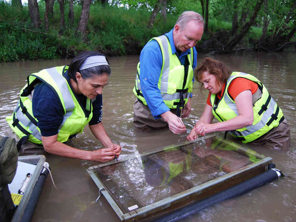 Scientists with the U.S. Geological Survey sample water in Goodwater Creek, Mo., for pesticides and other chemicals that m