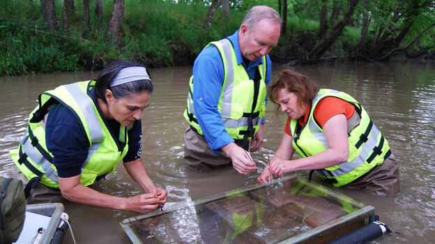 Scientists with the U.S. Geological Survey sample water in Goodwater Creek, Mo., for pesticides and other chemicals that may have run off from the surrounding land. (Harvest Public Media)
