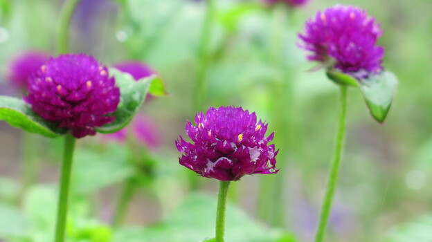 Many of the flowers at Hillwood are doing well despite the ever-changing local climate. (NPR)