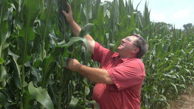 Farmer Richard Wilkins, a firm believer in genetically modified crops, examines the corn crop at his farm in Greenwood, Del. U.S. and EU officials begin talks Monday on an ambitious free-trade agreement. One  stumbling block is agriculture. Unlike the U.S., the EU bans the cultivation of genetically modified crops.