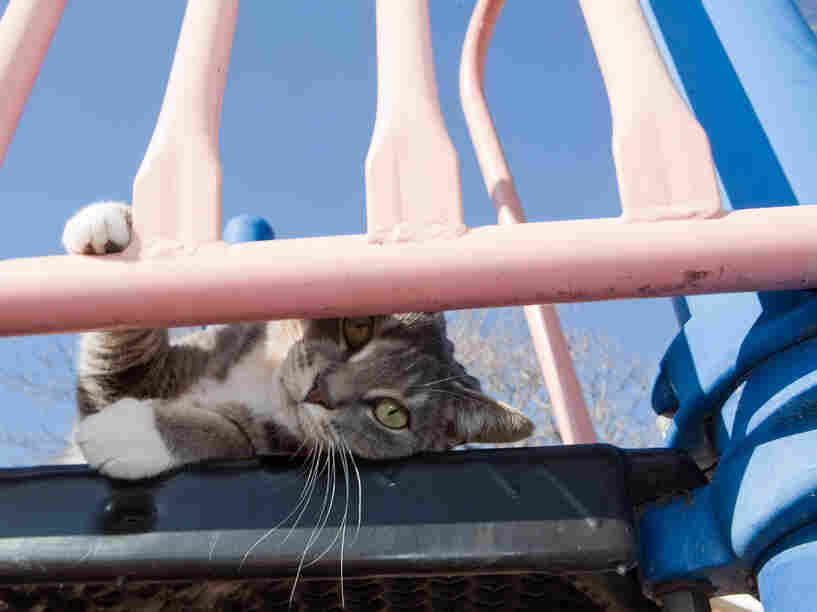 Playgrounds and sandboxes are popular hangouts for free-roaming cats. What they leave behind may not be so popular with humans.