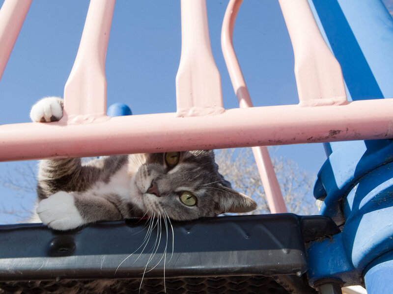 Pleasant Kitties Litter Playgrounds Spreading Harmful Parasites Pdpeps Interior Chair Design Pdpepsorg