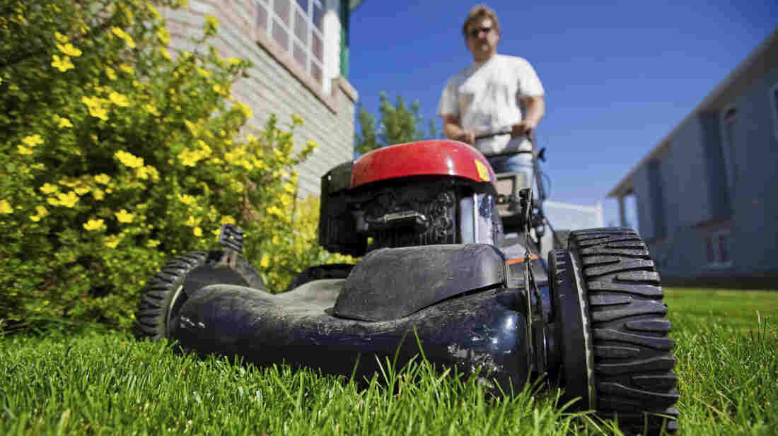 Homeowners can receive up to $4,000 for replacing their lawns with less thirsty plantings, in a rebate program run by the Los Angeles Department of Water and Power.