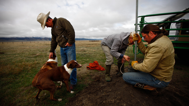 Bryan Ulring (left), ranch hand Graham Fulton (right) and Nature Conservancy ecologist Nathan Korb (center) install a pipe on a new well dug for the cattle Ulring manages for J Bar L Ranch. The ranch is working with The Nature Conservancy to try to preserve sage grouse habitat. (NPR)