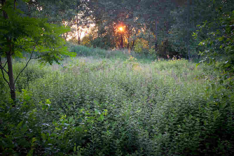 The woods right next to the field are a haven for addicts and dealers.