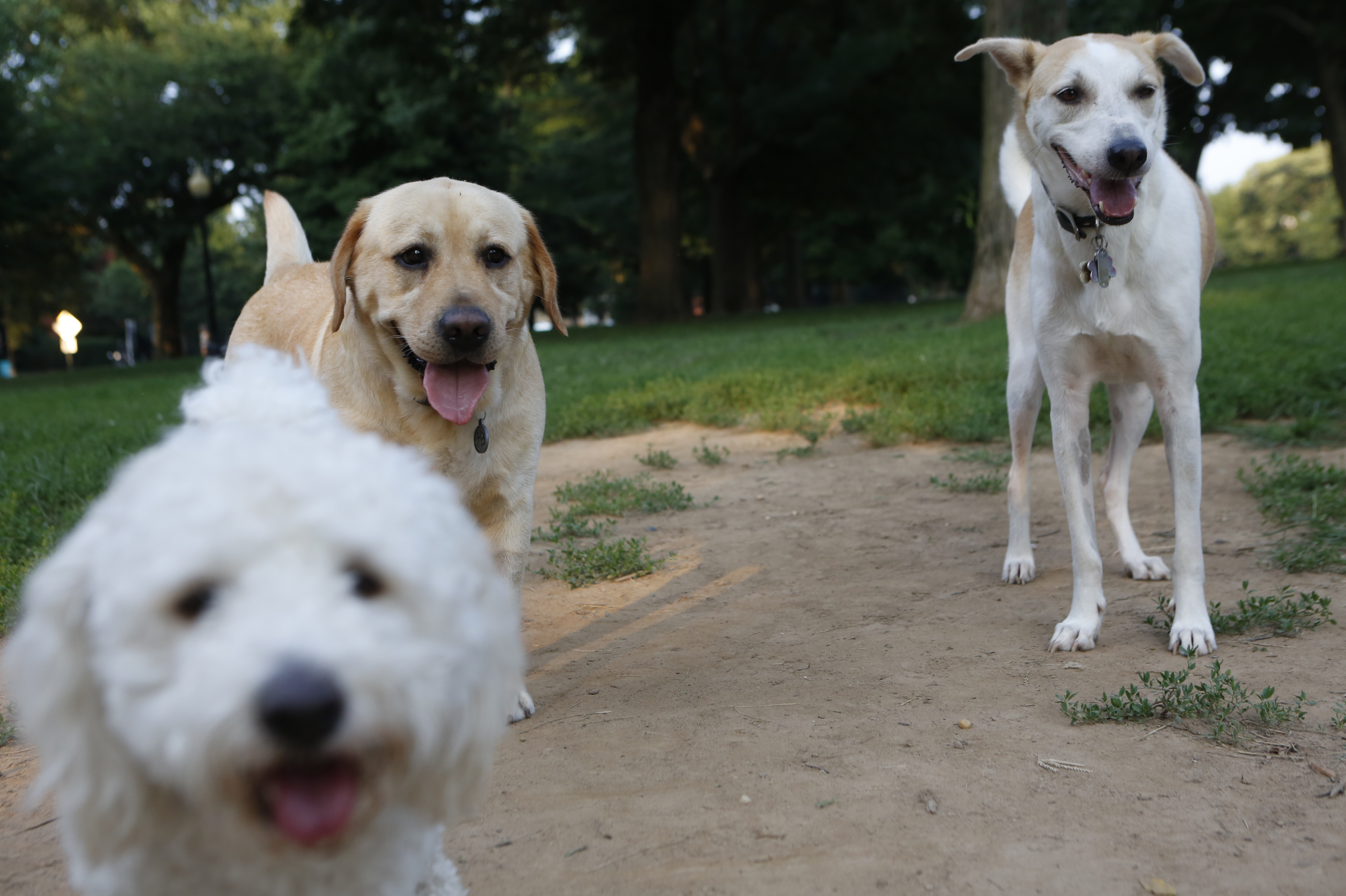 Barking Up The Family Tree: American Dogs Have Surprising Genetic Roots