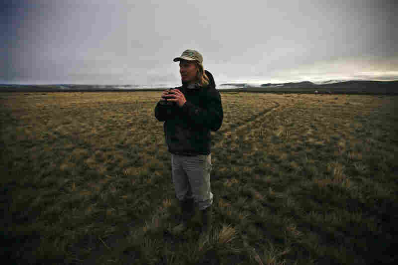 Ecologist Korb scouts a sage grouse lek, a highly stylized mating ritual, at dawn in the Centennial Valley.