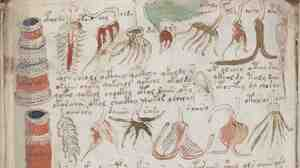 William Friedman, who helped create the NSA and became its first chief cryptologist, declared the Voynich Manuscript impossible to translate. He thought it was an early example of a made-up language.