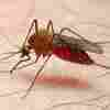 5 Stars: A Mosquito's Idea Of A Delicious Human